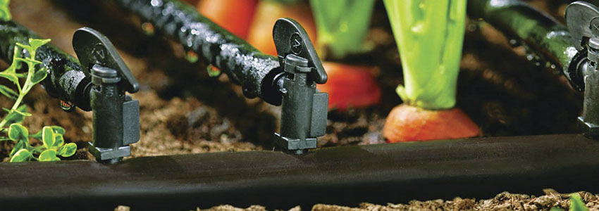 Изображение - Выращивание моркови как бизнес 4b2168ef123bc685007ca0c2a71b601f