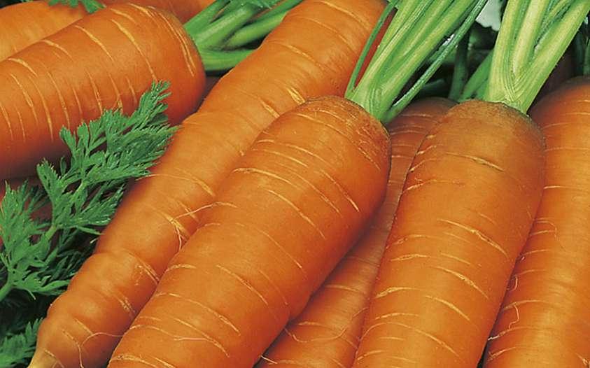 Бизнес на выращивании моркови 80